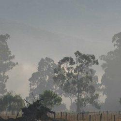 Misty Gums by the Goulborne
